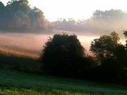 Foggy Field