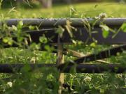 Lawn Mowing in Macro
