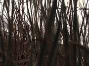 Through the Swamp