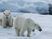 To The Arctic - Polar Bear Family Featurette