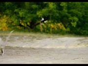 "Island of Lemurs: Madagascar - ""The Lemur Dance"""