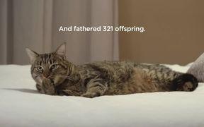 SPCA Commercial: Flirtatious Cat