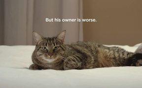SPCA Commercial: Flirtatious Cat