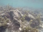Coral Reefs and Fishes in Deep Blue Water