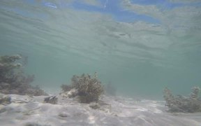 Snorkelling in Yonehara Beach