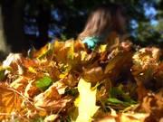 Pile of Leaves
