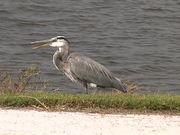 Ackerman Park - Bird on the bank
