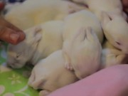Baby Bunnies with an Epic Soundtrack
