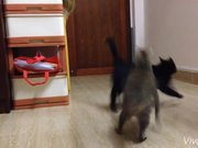 Cat's Attack