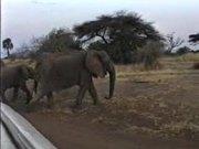Elephants, Serengeti National Park