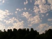 Clouds And Trees - Time Lapse