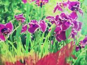 Plants Grow People