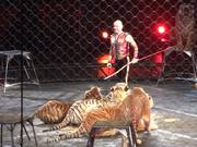 Ringling Bros & Barnum and Bailey Circus - Tigers