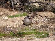 The Birdie