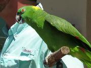 Parrot Speaks