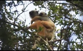 One Day on Earth 12.12.12 - Habitat (Madagascar)