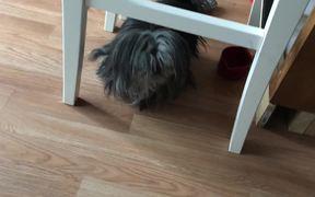Shaggy Doggie