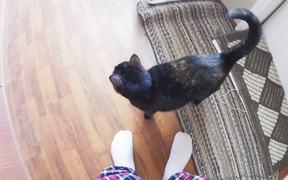 Black Cat & Red Cat