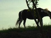 Beautiful Horse on the Meadow