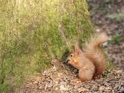 Squirrel at the Nature Reserve 1