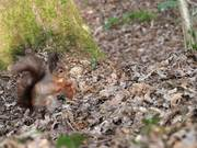 Squirrel at the Nature Reserve 2