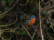 Mr. Kingfisher