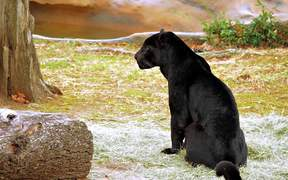 Olympus Om-d at the Zoo II