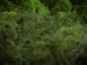Stop Motion Animation - Flower Monster