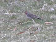 Colorful Birdie