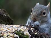 Pop Up Squirrel