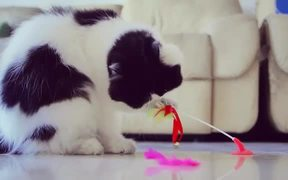 Cat and His Toy