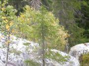 Jean Sibelius - Finlandia & Koli National Park