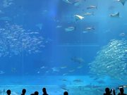 Camille Saint-Saëns - Aquarium