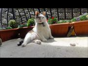 Italian Cats-A-Nova Ticklin' Your Funny Bone