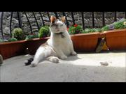 Italian Cats-A-Nova Ticklin' Your Funny Bone