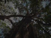 Views From Wonogiri