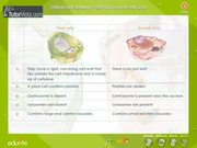 Different Between Plant Cell and Animal Cell
