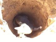 Piper Likes Holes
