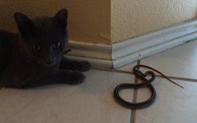 Kitty Cat Vs Snake