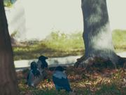 Crow Life