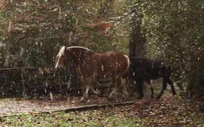 Horses and Falling Snow