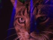 Meow Mix Video: A Meow Mix by Ashworth