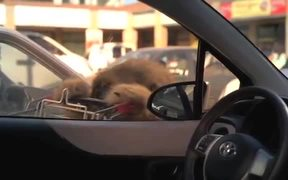Toyota Yaris Commercial: The Creature