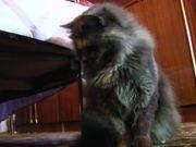 Cat Sonia Is Fun