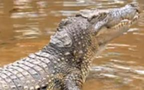 Land Rover Genuine Parts – Crocodile