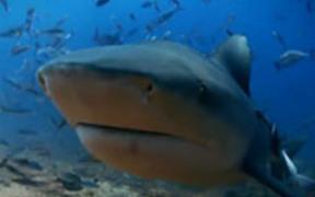 Sharks Rescored - Mini Documentary