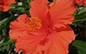 Summer Flowers By Gardenia C. Hung