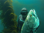 WSB - Spearfishing White Sea Bass