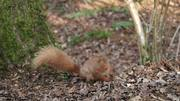 Squirrel at the Nature Reserve 3