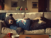 Virgin Campaign: Sofa Bear